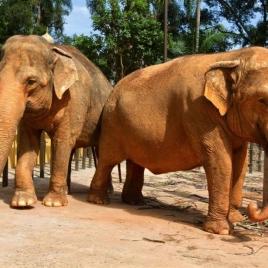foto referênte a Zoológico de São Paulo e Mercadão